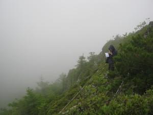 Экологические изыскания. Геоботаническое описание.